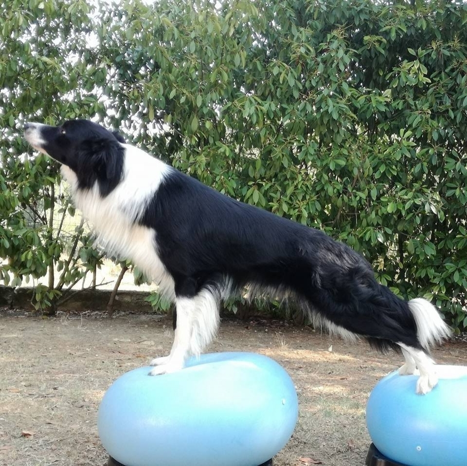 Dog Balance Fit - ginnastica propriocettiva per animali - Dog Balance Fit